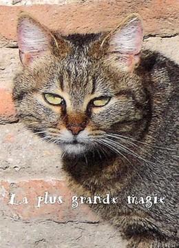 Un vieux chat fixe le lecteur d'un regard torve